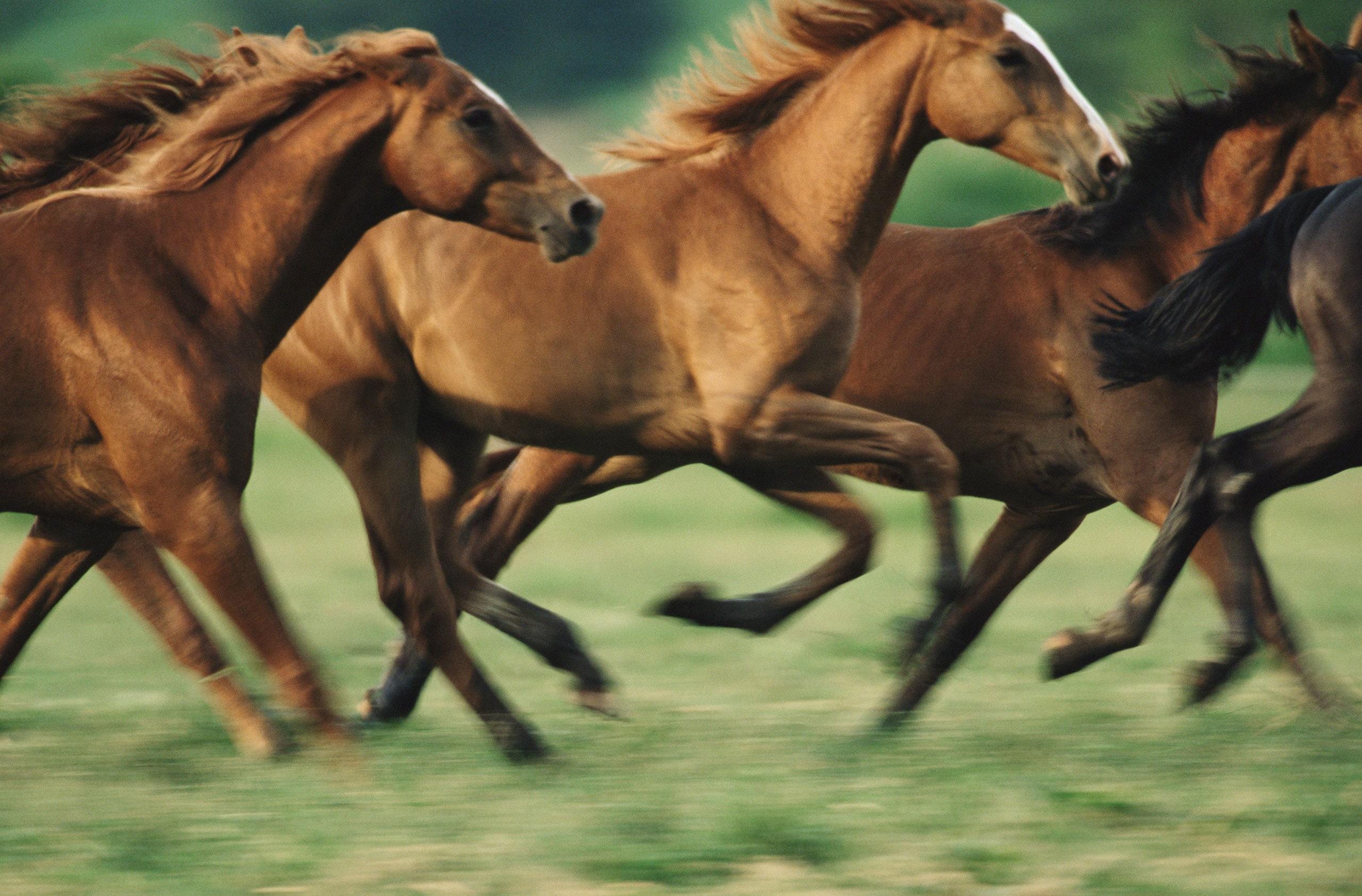 فروش اسب شیراز | باشگاه سوارکاری ماهان