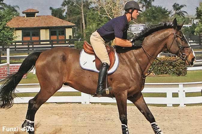 تربیت انواع اسب در شیراز | باشگاه سوارکاری ماهان