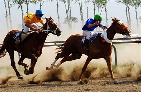 آموزش اسب در شیراز | باشگاه سوارکاری ماهان