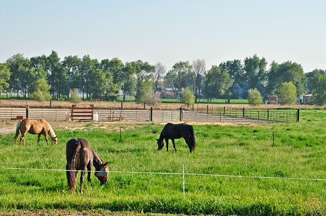 مزایای مرتع برای اسب | باشگاه سوارکاری ماهان