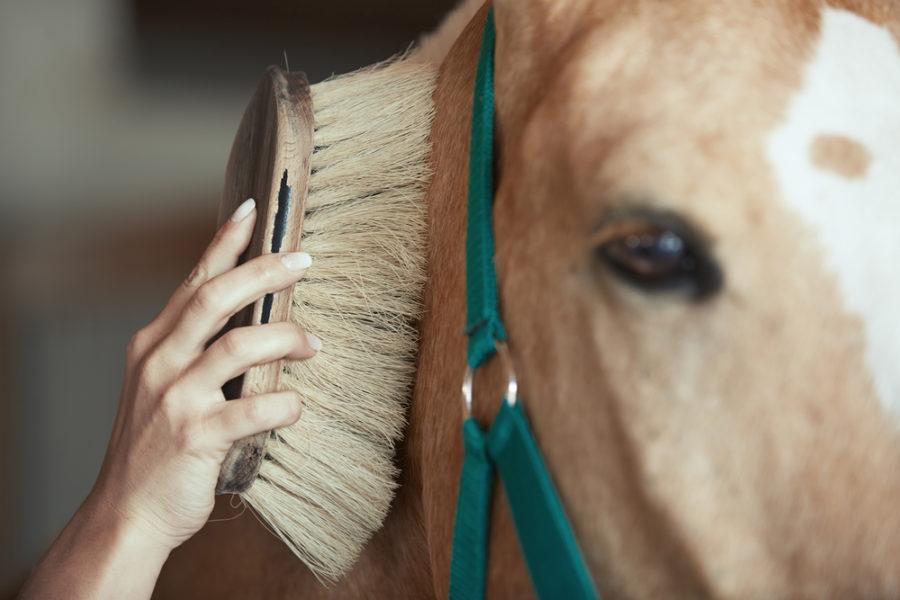 هزینه نگهداری اسب   باشگاه سوارکاری ماهان