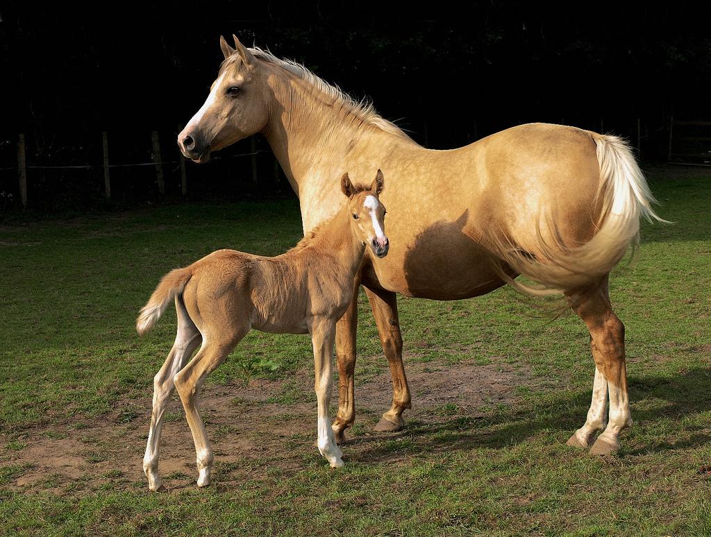 خرید انواع اسب در شیراز | باشگاه سوارکاری ماهان